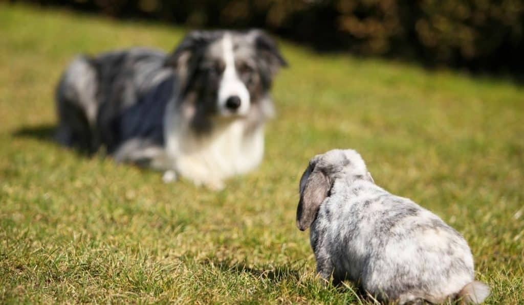 dog and a rabbit