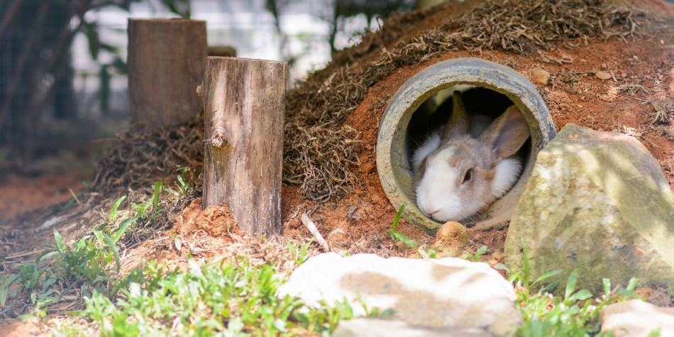 rabbit sleeping in a burrow