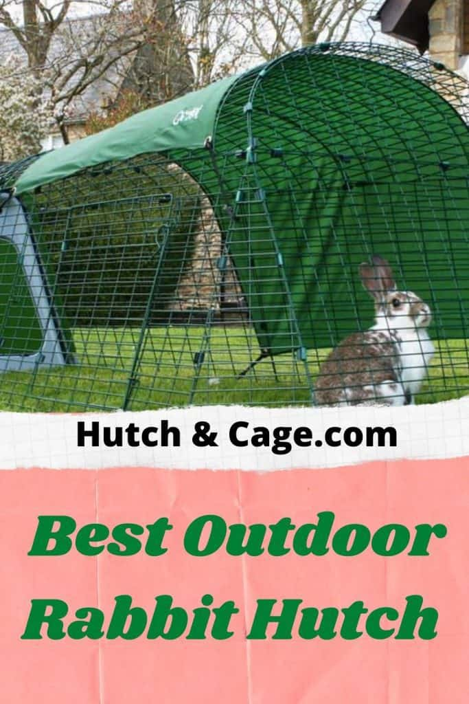rabbit in a hutch