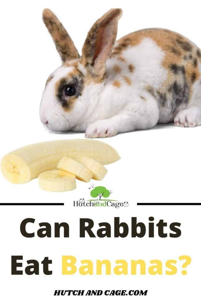 rabbit eating a banana