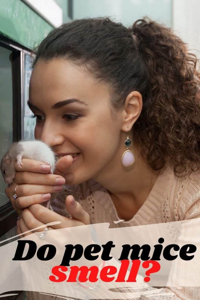 Do pet mice smell? Control Odor in a mouse cage 1