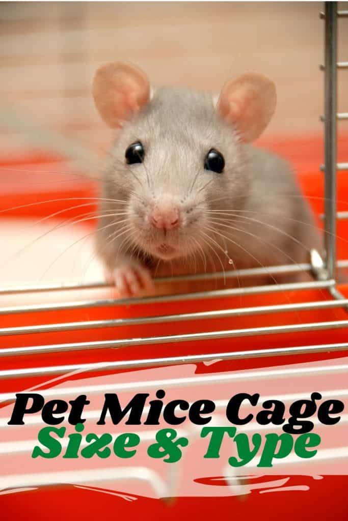 pet mice in a cage