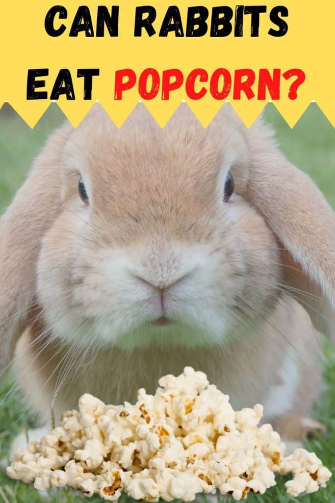 rabbit eating popcorn