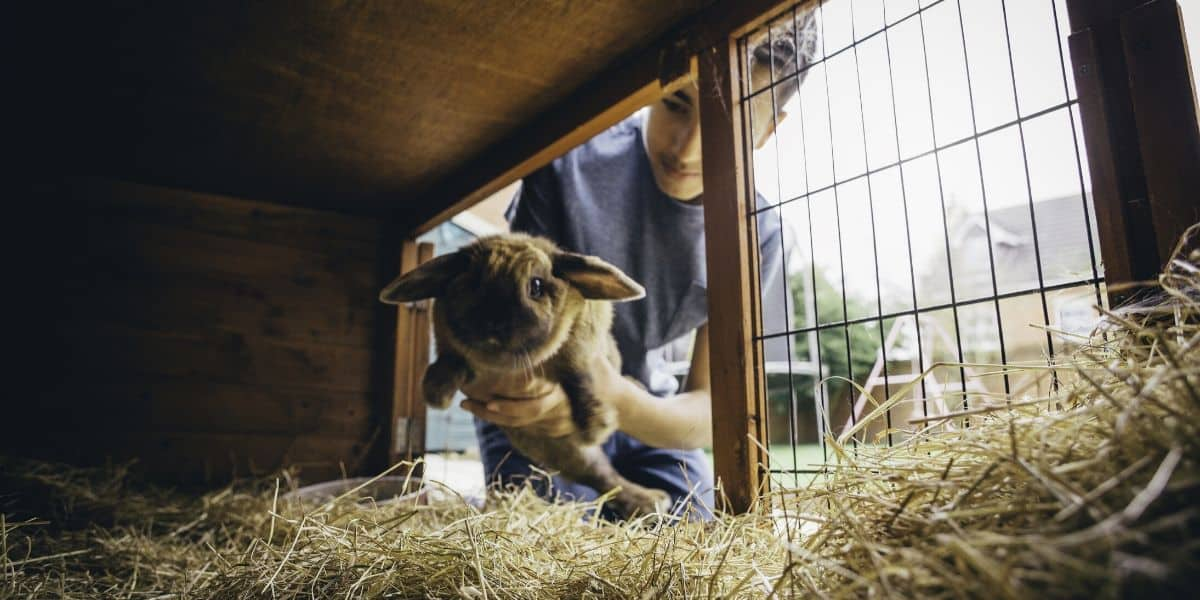 boy with rabbit in a hutch