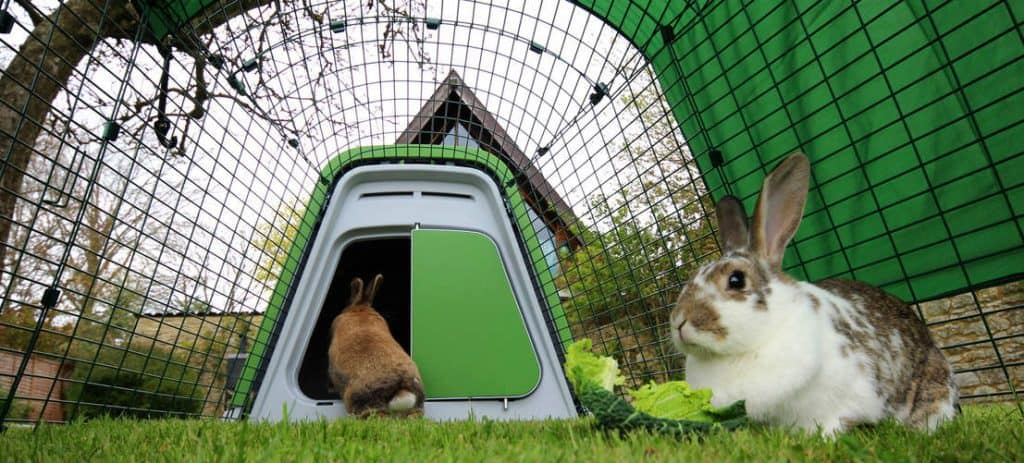 eglu rabbit hutch