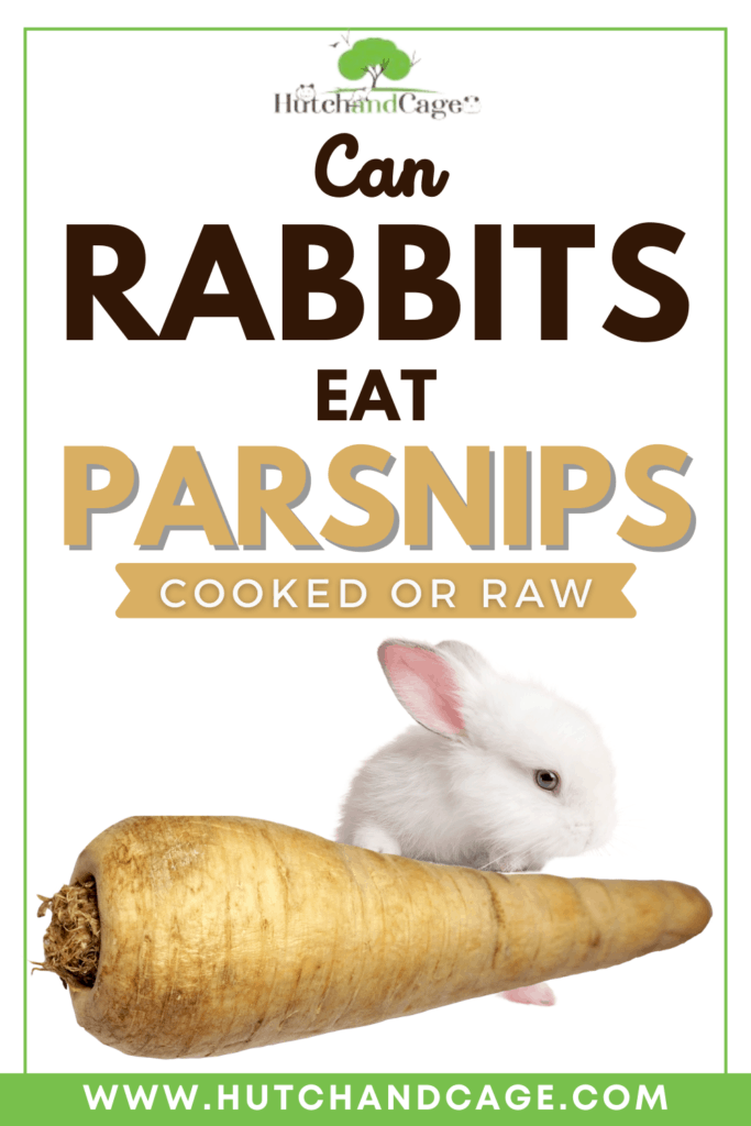 Can Rabbits Eat Parsnips