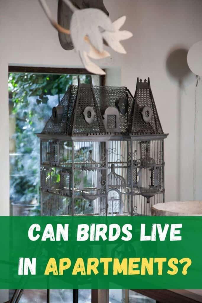 bird cage in an apartment