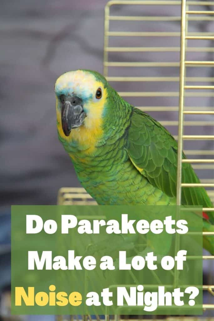 PARAKEET IN A CAGE