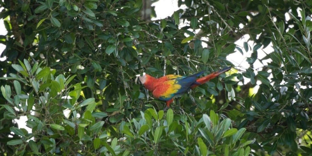 parrot up a tree
