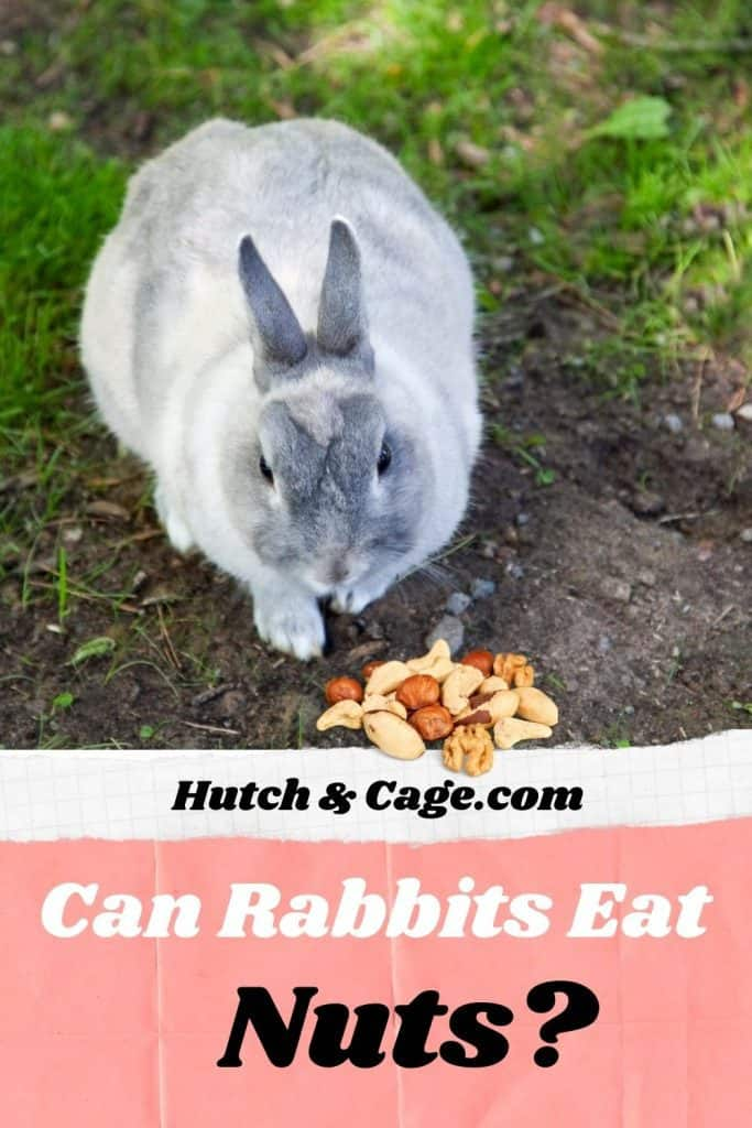 rabbit eating nuts