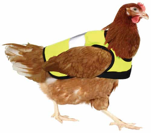 chicken wearing a hi-viz jacket