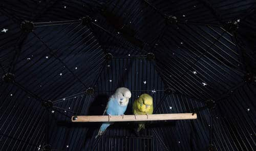 budgies covers to sleep better at night