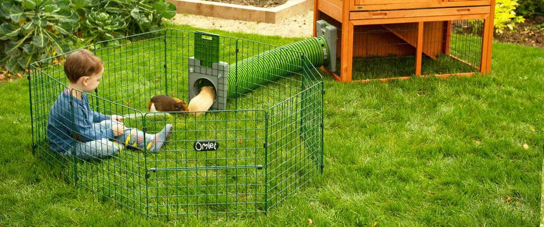 outdoor guinea pig runs