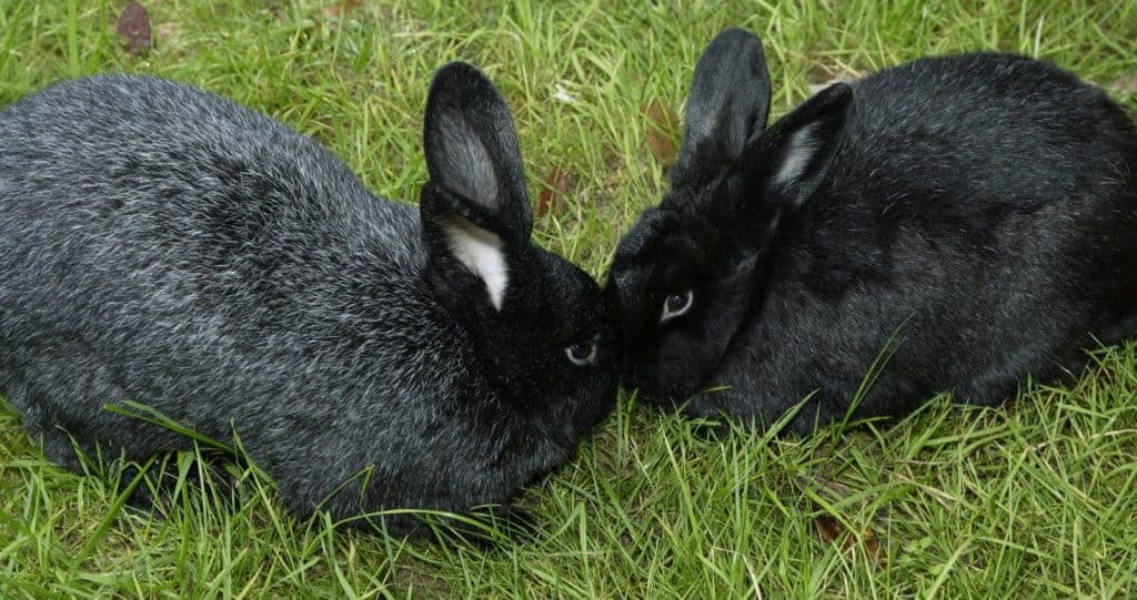 Cutest Pet Rabbits | Which Are The Cutest Bunny Breeds In The World? 1
