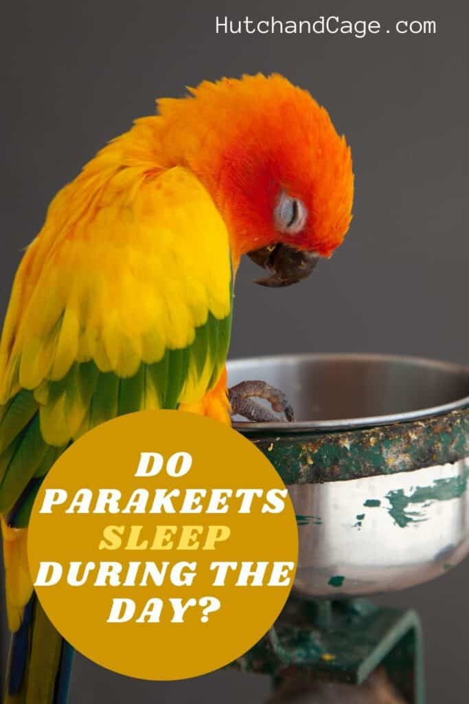 parakeets sleeping during the day