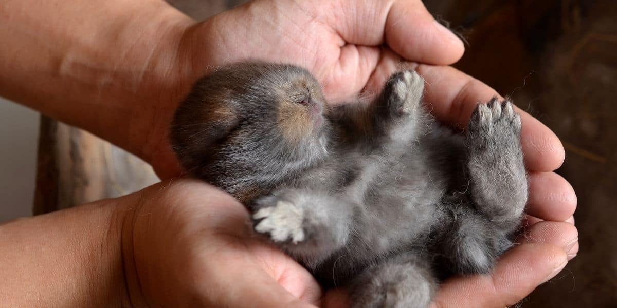 holding a baby rabbit