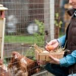 protecting chicken eggs from snakes