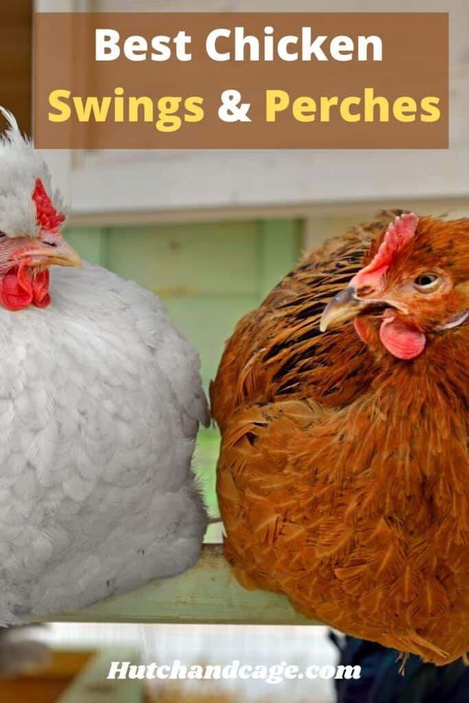 chickens on a perch