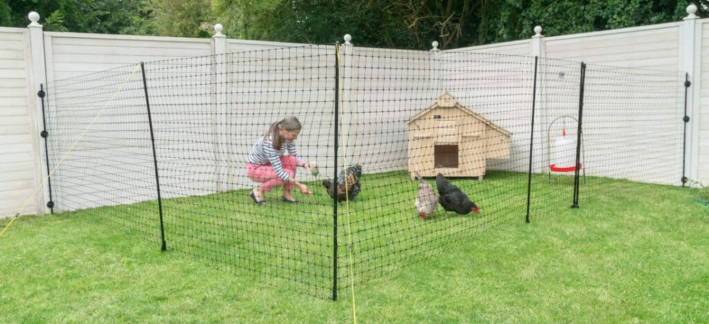 chicken fence