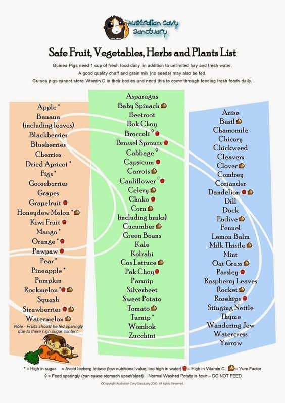 safe herbs for guinea pigs
