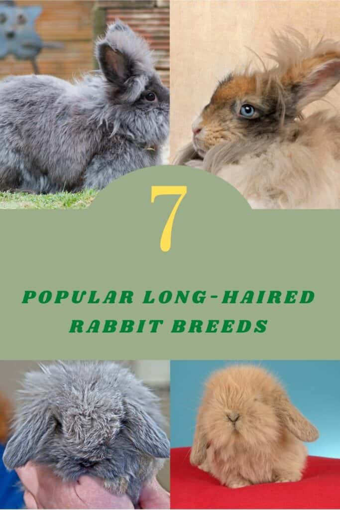 long-haired rabbit breeds