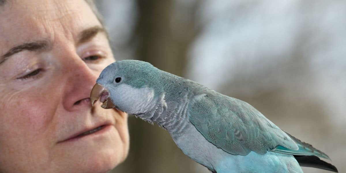 owner bonding with her parrot