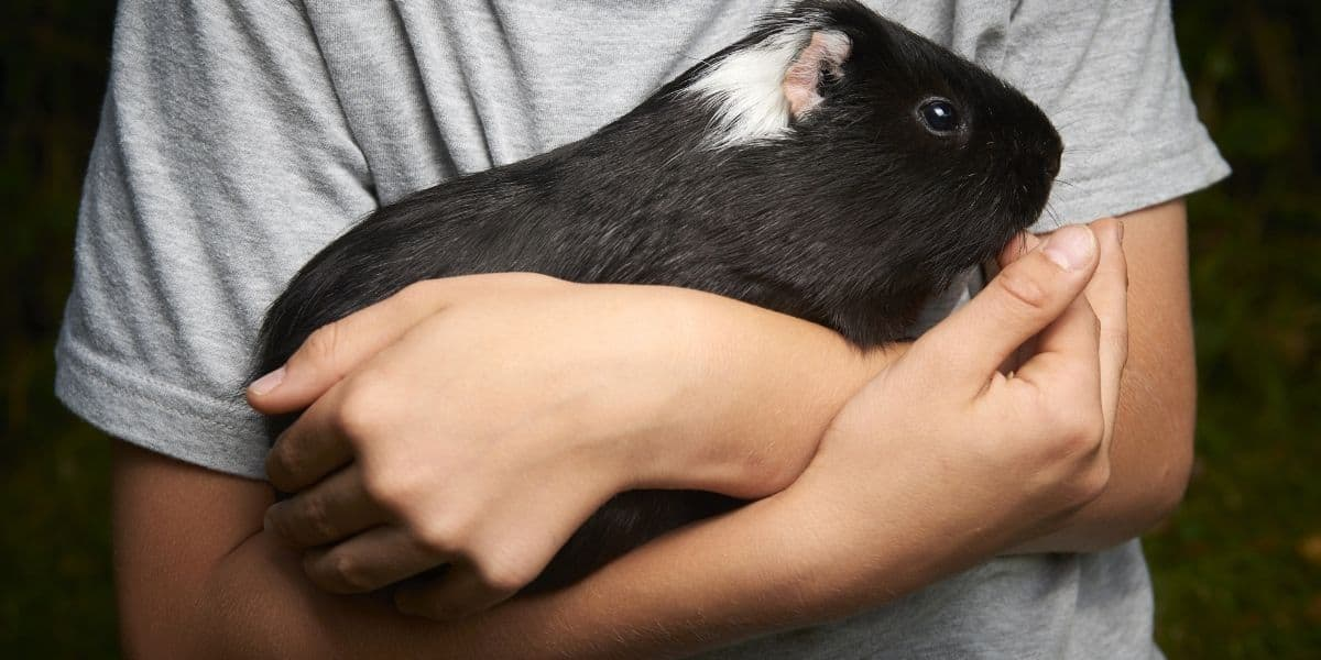 Small Pets To Help Treat Depression 9 Pets That Make You Feel Happy Hutch And Cage