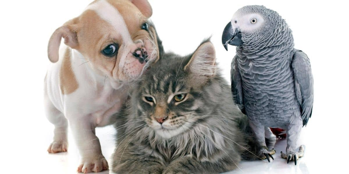 cat,dog and parrot