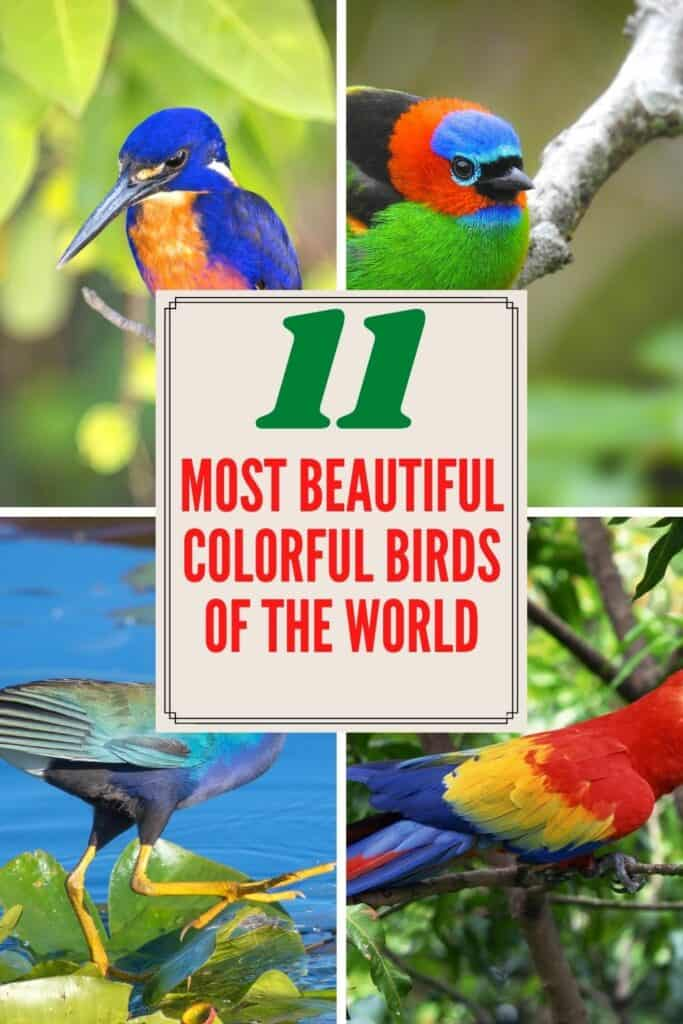 Most Beautiful Colorful Birds of the World