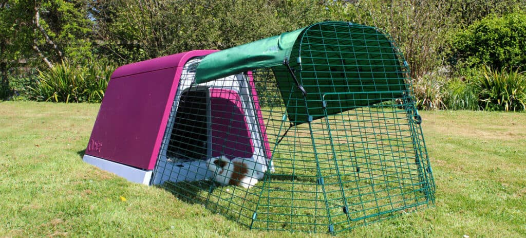 Guinea pig hutch from omlet