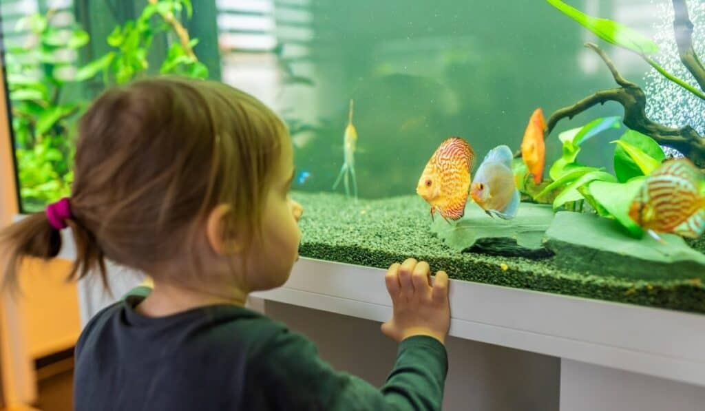 kid looking at a fish tank