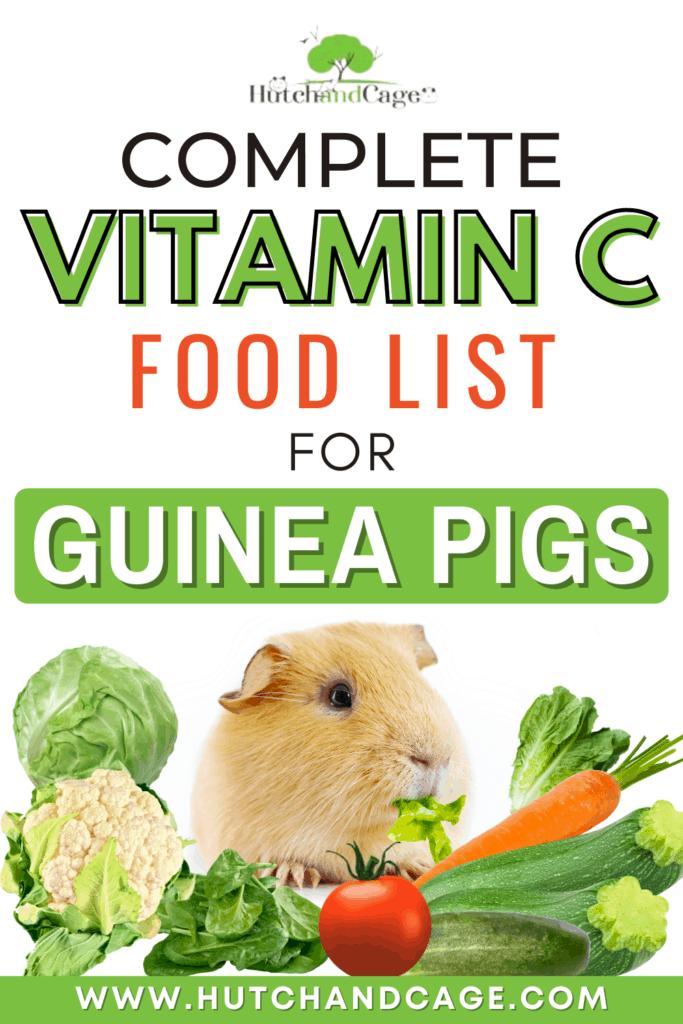 Complete Vitamin C Food List for Guinea Pigs