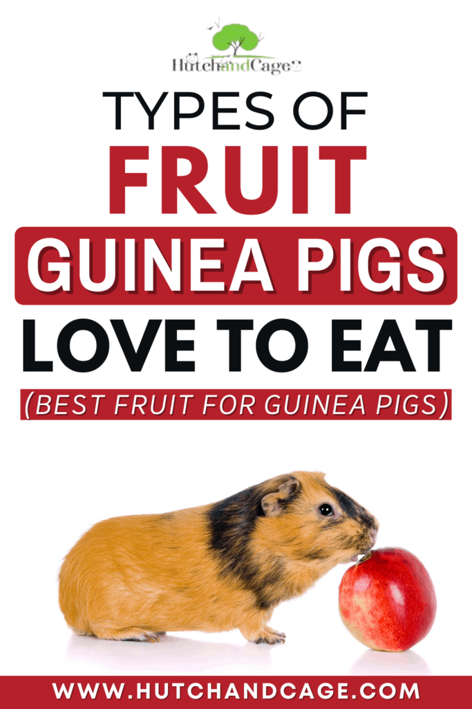 Types of fruit guinea pigs love to eat