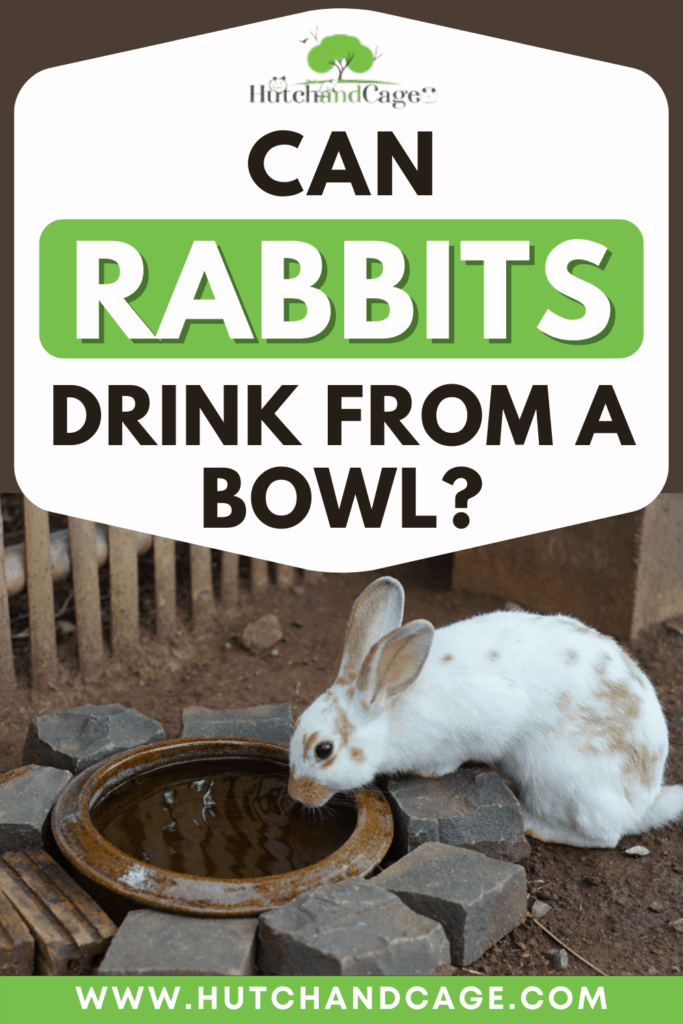 can rabbits drink from a bowl