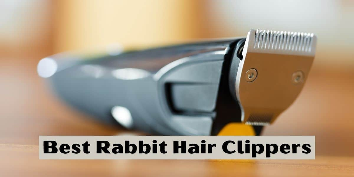 Best Rabbit Hair Clippers