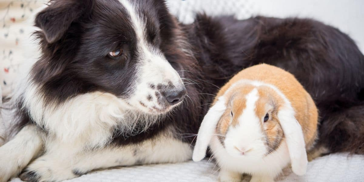 dog and pet rabbit