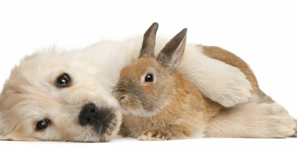rabbit and dog getting alone