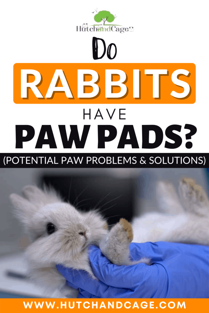 Do Rabbits Have Paw Pads