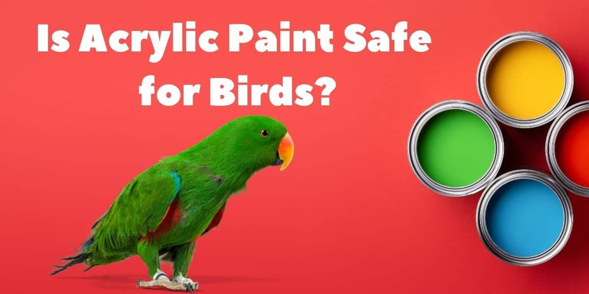 Is Acrylic Paint Safe for Birds