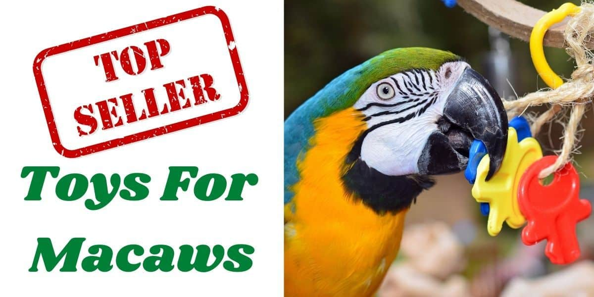 toys for macaws