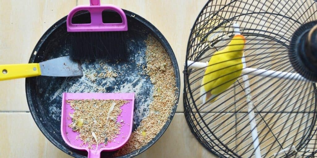 cleaning a bird cage