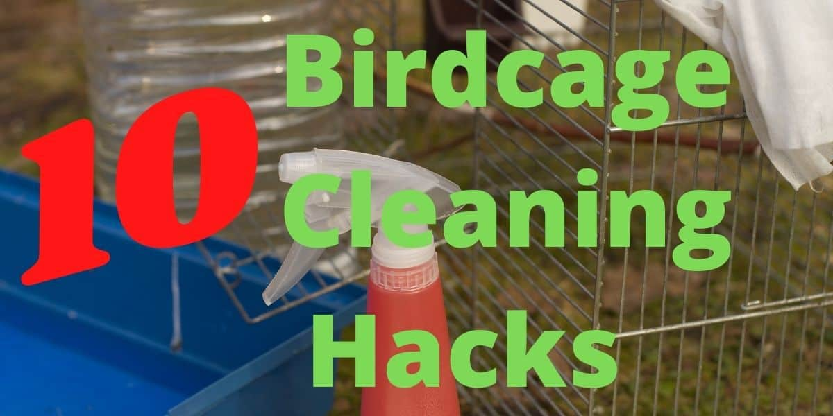 Birdcage Cleaning Hacks