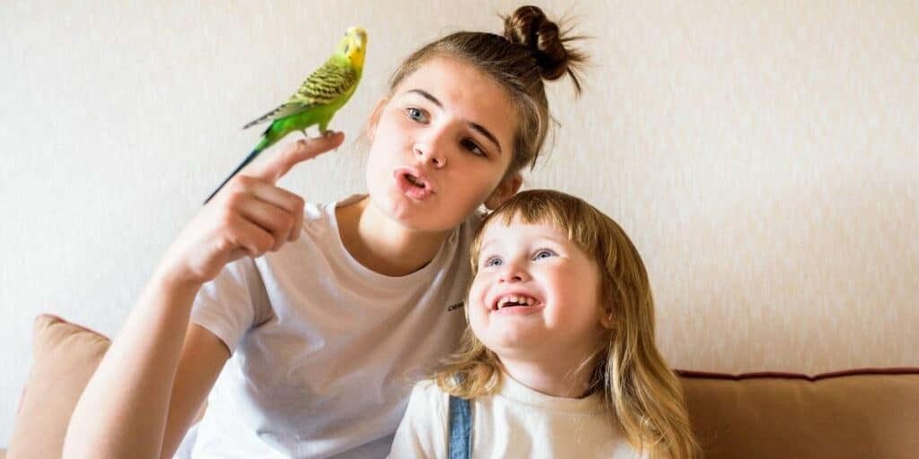 budgie with family
