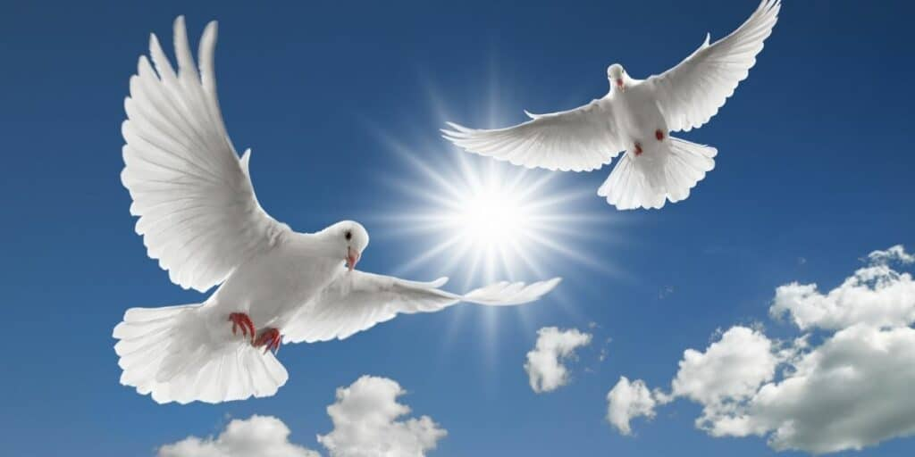 group of doves
