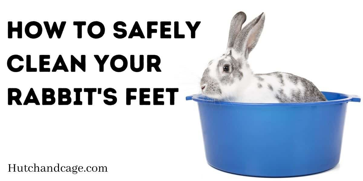 How To Safely Clean Your Rabbit's Feet